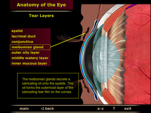 Anatomy and Physiology of the Eye - Interactive CD-ROM